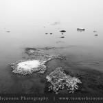 Lauttasaaren ryssänkärjessä riittä elämää pakkasesta ja sumusta huolimatta