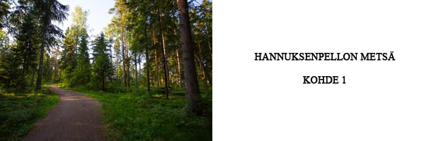hannuksenpellon metsä - kohde 1