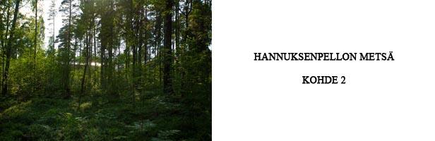 hannuksenpellon metsä - kohde 2