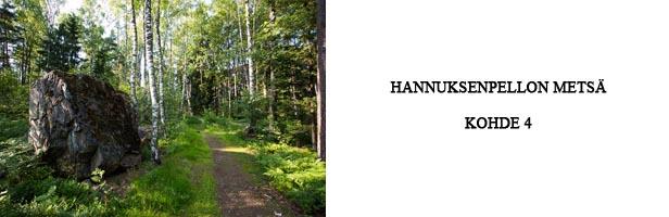 hannuksenpellon metsä - kohde 4